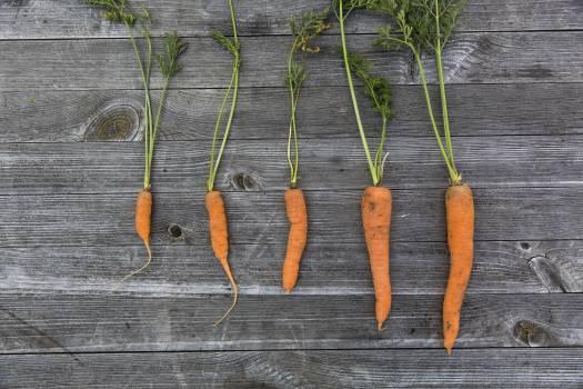 Row of fresh carrots #394436
