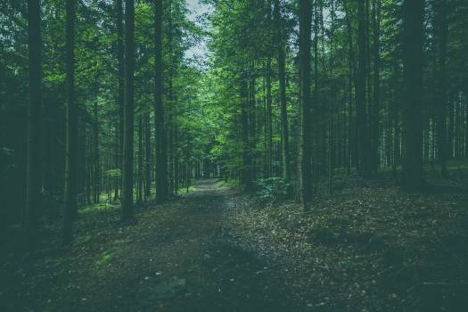 German forest Free Photo