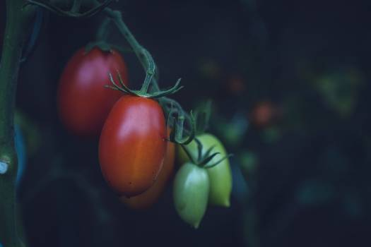 Close up of cherry tomatoes Free Photo