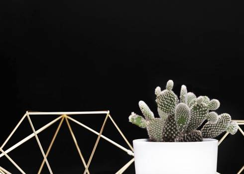 Small cactus with a black background #395697