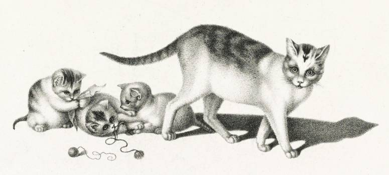 Illustration of domestic cat and three playful kittens by Gottfried Mind (1768-1814). Original from Library of Congress.  #395837