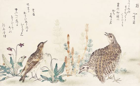Uzura Hibari by Utamaro Kitagawa (1753-1806), a traditional Japanese ukiyo-e style illustration of quail and meadowlark birds and a Japanese poem written on both sides of the pages. Original from Library of Congress.  #395870