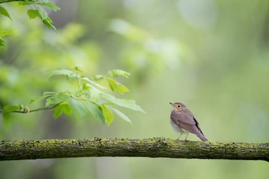 Brown Bird on Tree Branch during Daytime Free Photo