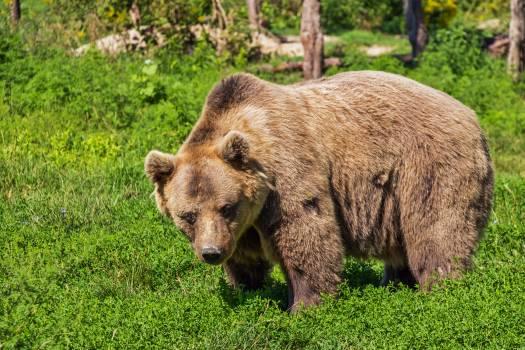 Nature animal bear teddy bear #39680