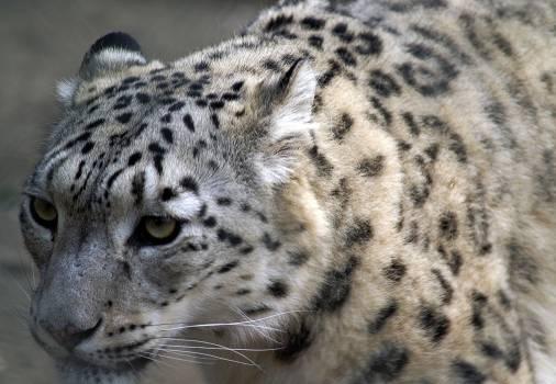 Animal fur cat macro #39694
