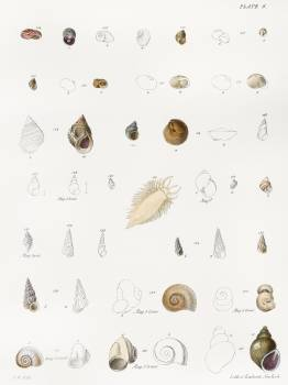 Different types of seashells illustration from Zoology of New York (1842–1844) by James Ellsworth De Kay. Original from The New York Public Library.  #397243