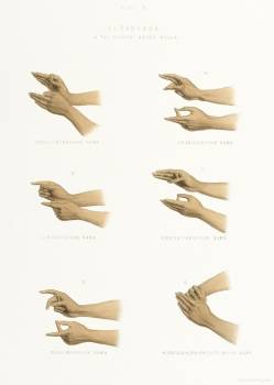 Hand Signs from The Sundhya or the Daily Prayers of the Brahmins (1851) by Sophie Charlotte Belnos (1795–1865). #397588