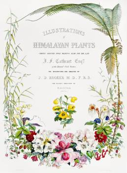 Title page from Illustrations of Himalayan plants (1855) by W. H. (Walter Hood) Fitch (1817-1892). Original from The New York Public Library.  #398036