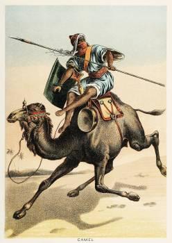 Camel from Johnson's household book of nature (1880) by John Karst (1836-1922). #398056