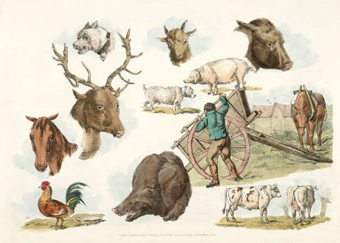 Illustration of heads of domestic and wild animals and full figure of a dog, pig, horse, cows and a cock; a working farmer from Sporting Sketches (1817-1818) by Henry Alken (1784-1851). Original from The New York Public Library.  Free Photo