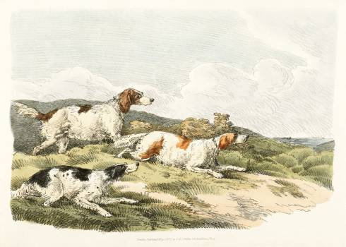 Illustration of running hounds from Sporting Sketches (1817-1818) by Henry Alken (1784-1851). Original from The New York Public Library.  #398089