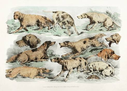 Illustration of hounds from Sporting Sketches (1817-1818) by Henry Alken (1784-1851). Original from The New York Public Library.  #398094