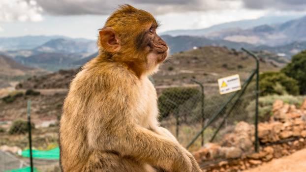 Brown Monkey Sitting on Ground #39840