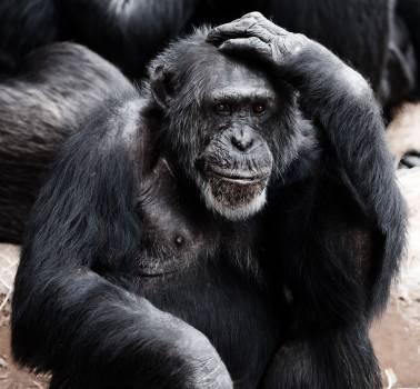 Black Ape #39868