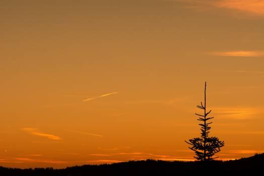 Lone tree at sunset - free stock photo #398697