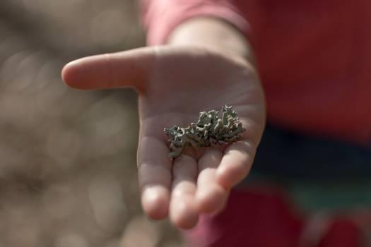 Lichen on children hand - free stock photo Free Photo