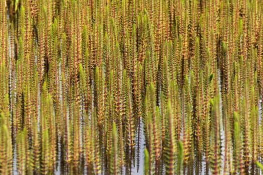 Nature Pattern – Lake Aquatic Flowers - free stock photo #398746