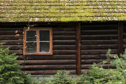 Forest log cabin detail - free stock photo #398751