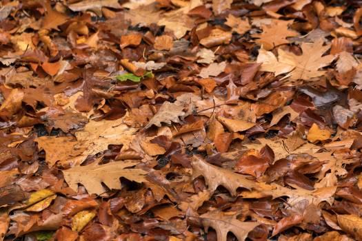 Autumn Leaves - free stock photo #398754