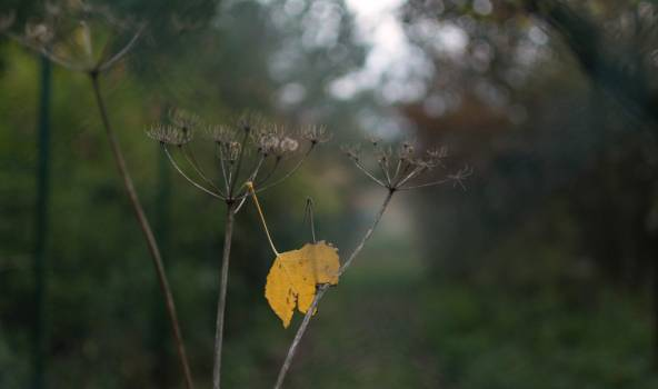 Autumn Nature Detail - free stock photo #398765