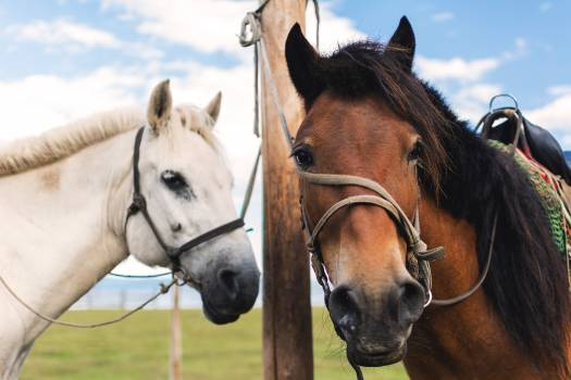 White and brown horse - free stock photo #398767