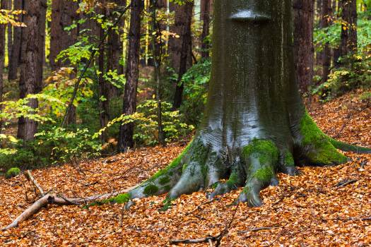 Tree In the Autumn Forest - free stock photo #398819