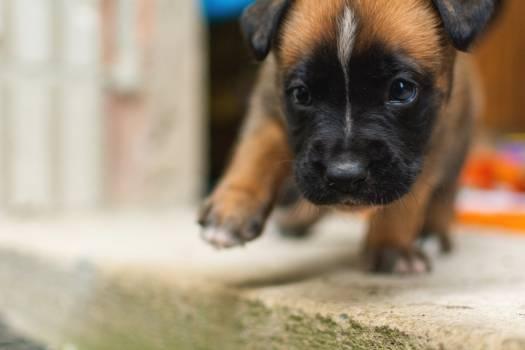 Cute Puppy - free stock photo #398827