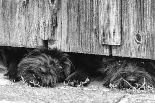 Dogs are guarding the house - free stock photo #398834