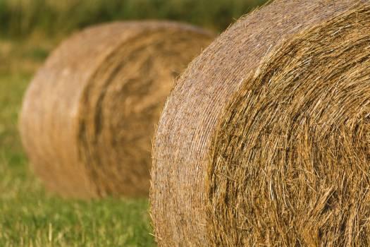 Round Hay Bales - free stock photo #398857