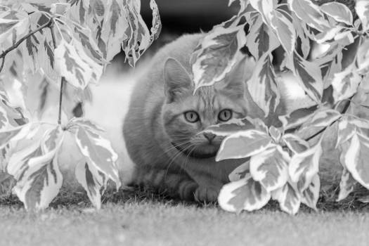 Hidden Cat Hunting - free stock photo #398889