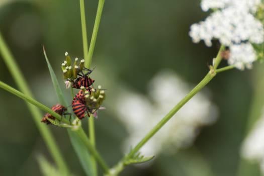 Italian Striped Bug - free stock photo #398930