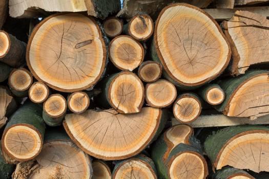 Wood - free stock photo #398976