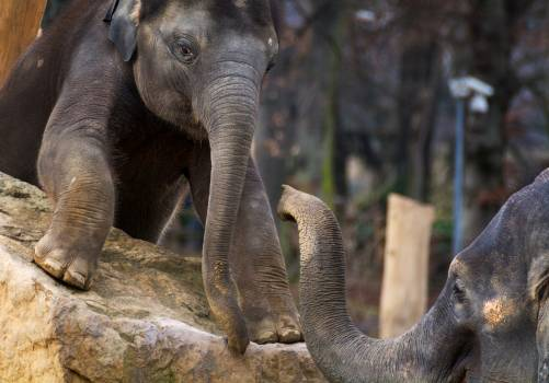 Young Elephant With Mother - free stock photo #399021