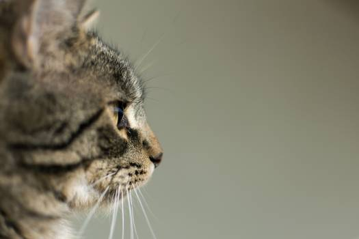 Side View Portrait of Cat - free stock photo #399029