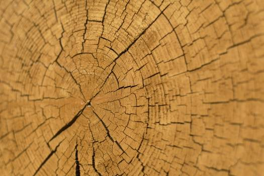 Wood Slice Cross Section - free stock photo #399073