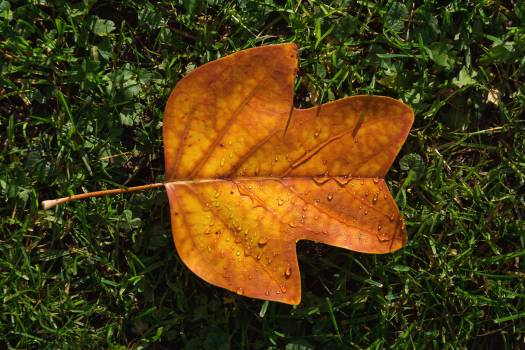 Autumn Leaf on Green Grass - free stock photo #399119