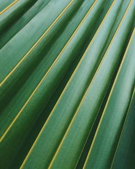 Summer pattern texture plant Free Photo