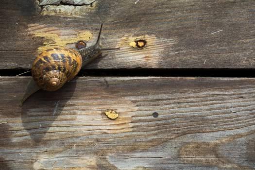 Snail on the wood - free stock photo Free Photo