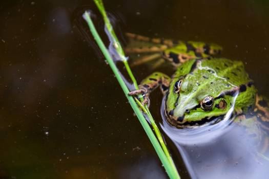 Green Frog - free stock photo #399363