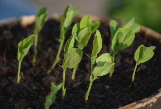 Young seedlings of plants - free stock photo Free Photo