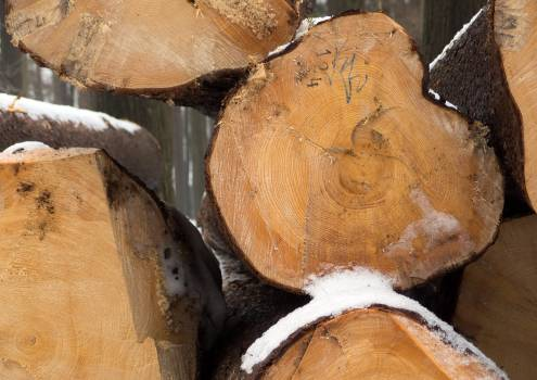 Stack Of Wood - free stock photo #399586