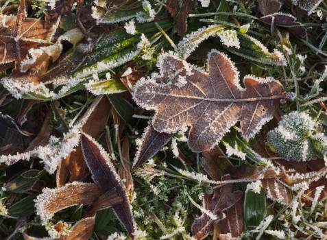 Frozen Leaves And Grass - free stock photo #399635
