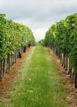 Vineyard South Moravia - free stock photo #399715