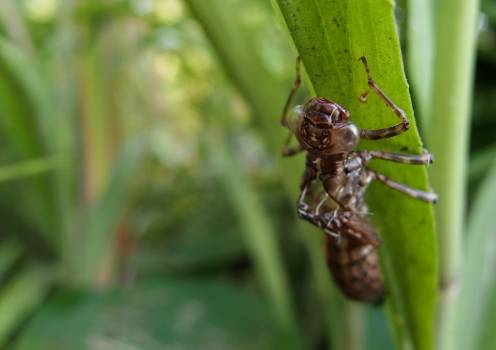 Moulted Nymph Of The Dragonfly - free stock photo #399758