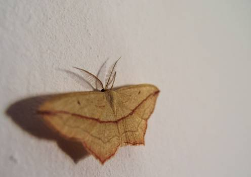 Moth on the Wall - free stock photo #399811
