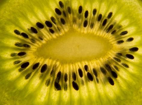 Kiwi slice closeup - free stock photo Free Photo