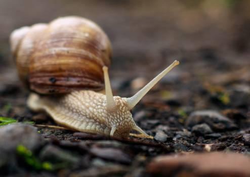 Snail Close Up - free stock photo Free Photo
