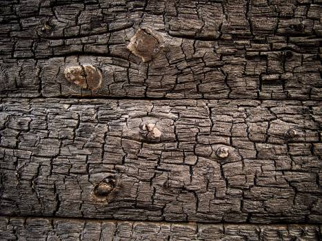 Burnt wood texture - free stock photo #400068