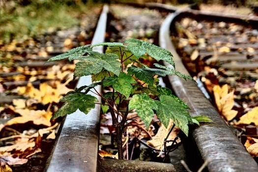 Small Tree And Rails - free stock photo #400116