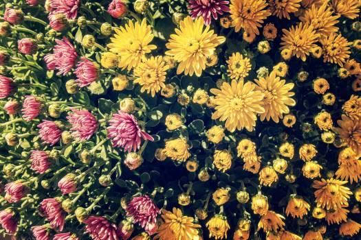 Yellow Flowers - free stock photo #400144